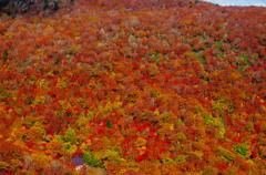 紅葉パノラマ