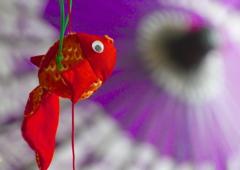 雛祭りの金魚