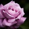 苦手な花でひたすら練習・・・・・
