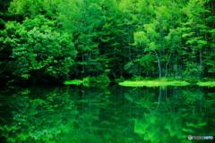 美しい森の緑