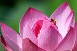 ミツバチさん とまっても可愛い♪