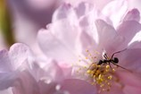 美味しい蜜はアリますか?