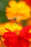 ミツバチさん 秋の収穫祭