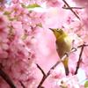 メジロさん 春を満喫 5