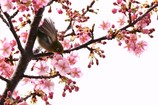 メジロさん 春を満喫 3