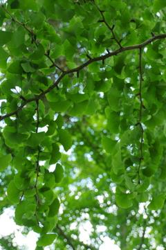 新緑の木陰