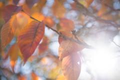 大阪城の紅葉