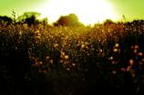 太陽の香り