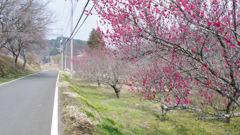 梅by the road