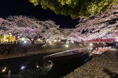 夜桜 芭蕉結びの地