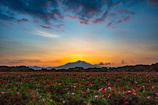 筑波山の朝焼け