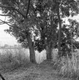 河川敷の樹