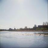 河川敷を歩く~大和川2