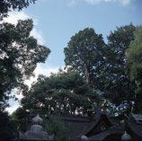 散歩の途中~神社の杜