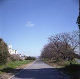 河川敷を歩く~大和川9