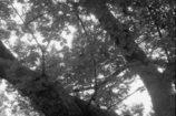 夏のひとコマ3~蝉の殻