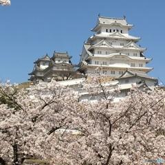 お城と桜2018