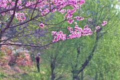 みんなの春
