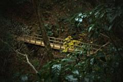 高尾山自然研究路3号  黄葉と橋