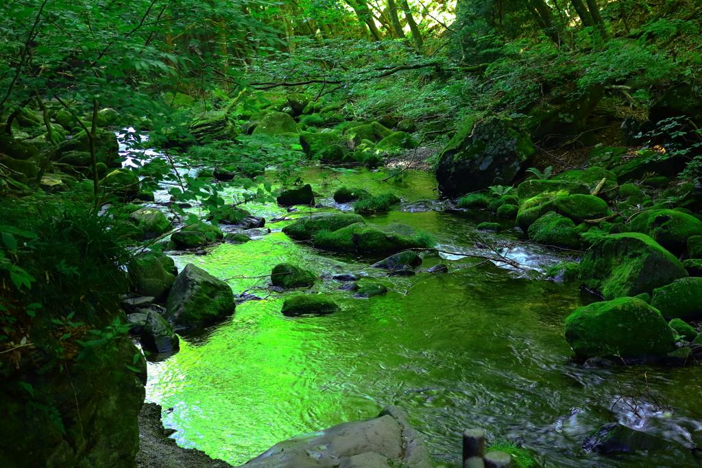 反映 森の色