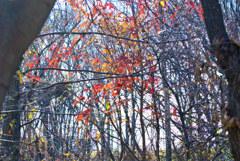 雑木林 遠ざかる秋