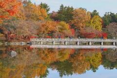 庭園風景  木橋