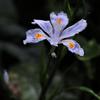 小径の春花…