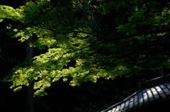 禅寺の緑景…2