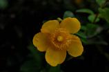 残夏の花彩…1