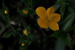 小径の春花…2