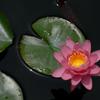 初夏の旬花…3