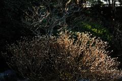 古刹の冬光…3