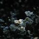 神無月の禅花…2