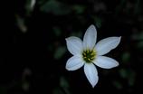残夏の花彩…2
