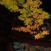 秋色の妙本寺…1