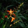 初夏の旬花…4