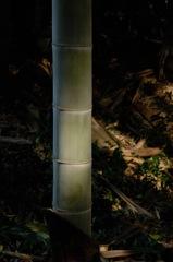 竹林の木漏れ日…3