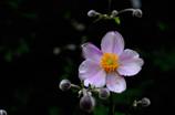 残夏の花彩…3