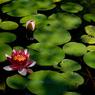 源氏山 池の彩り…