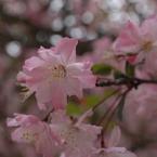 春日和の淡色…1