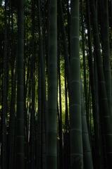 竹林の木漏れ日…2