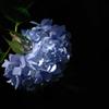 古都の色変花…7