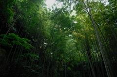 竹林の木漏れ日…1