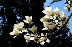 北条の春花…1