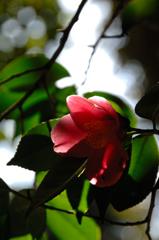 北条の春花…3
