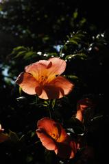 古刹の赤花…3