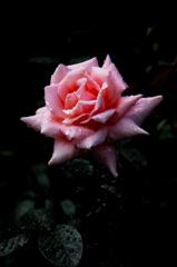古都の秋麗花…10