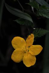 小径の春花…1