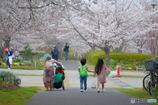 桜三月散歩道