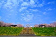 桜堤の空と雲